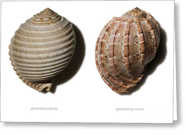 Tun Greeting Cards - Shell Line Systems Greeting Card by Raul Gonzalez Perez