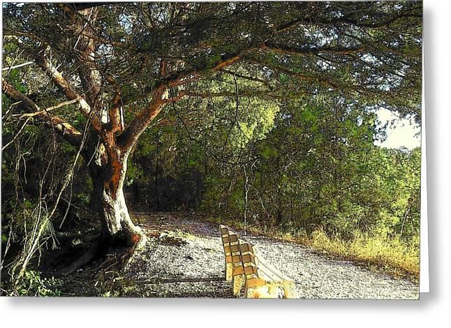 Cedar Key Greeting Cards - Shell Mound View TN Greeting Card by Sheri McLeroy