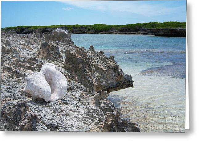 Heather Kirk Greeting Cards - Shell on Dominican Shore Greeting Card by Heather Kirk