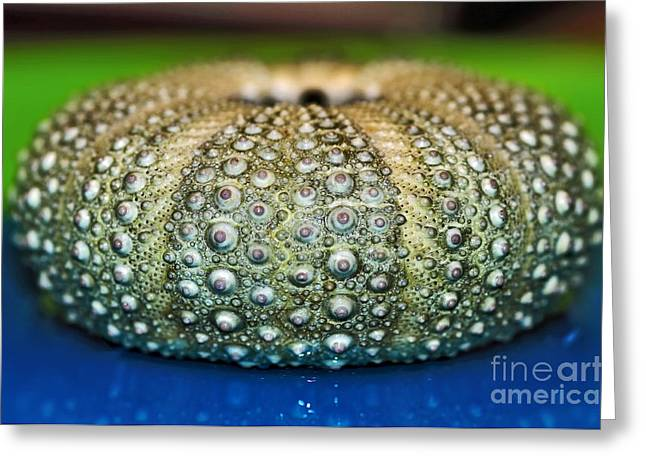Shell Texture Greeting Cards - Shell with Pimples Greeting Card by Kaye Menner