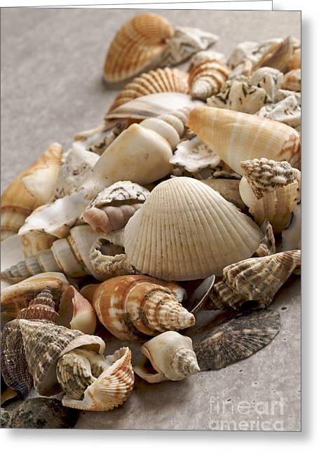 Group-of-objects Greeting Cards - Shellfish shells Greeting Card by Bernard Jaubert