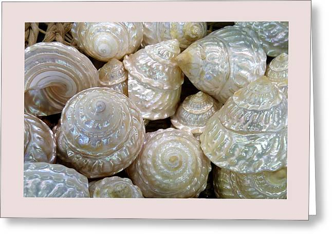 Carla Parris Greeting Cards - Shells - 4 Greeting Card by Carla Parris
