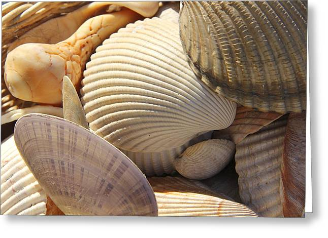 Shell Texture Greeting Cards - Shells 1 Greeting Card by Mike McGlothlen