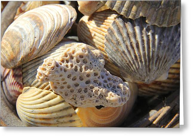 Shell Texture Greeting Cards - Shells 3 Greeting Card by Mike McGlothlen