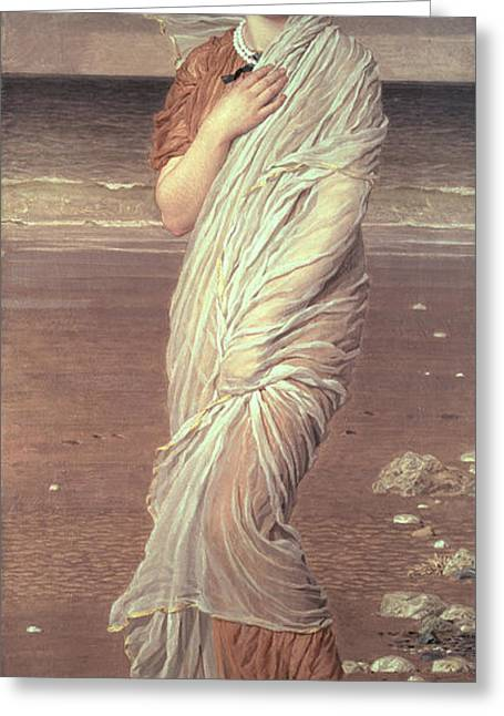 On The Beach Greeting Cards - Shells  Greeting Card by Albert Joseph Moore