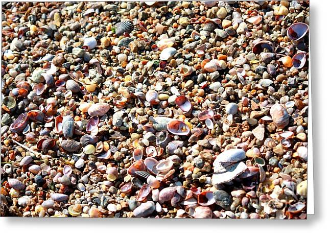 Shell Texture Greeting Cards - Shells and Rocks Greeting Card by Carol Groenen