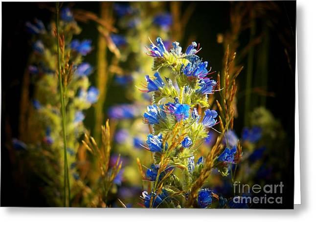 Shenandoah Valley Greeting Cards - Shenandoah Flowers Greeting Card by Joyce Kimble Smith