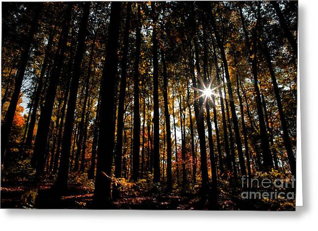 Aperture Greeting Cards - Shenandoah Red Greeting Card by Irene Abdou