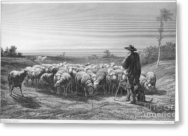 Shepherd Staff Greeting Cards - SHEPHERD, 19th CENTURY Greeting Card by Granger