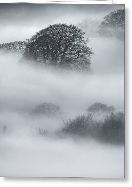 Castleton Greeting Cards - Sherriff Wood Greeting Card by Andy Astbury