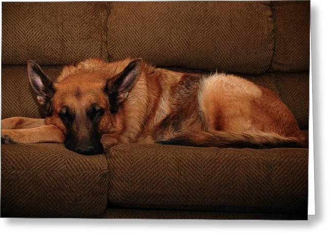 Dog Pics Greeting Cards - Shhh. Dog Sleeping Here - German Shepherd Dog Greeting Card by Angie Tirado
