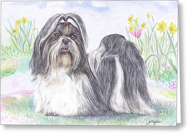 Toy Dog Greeting Cards - Shih Tzu Greeting Card by Gail Dolphin