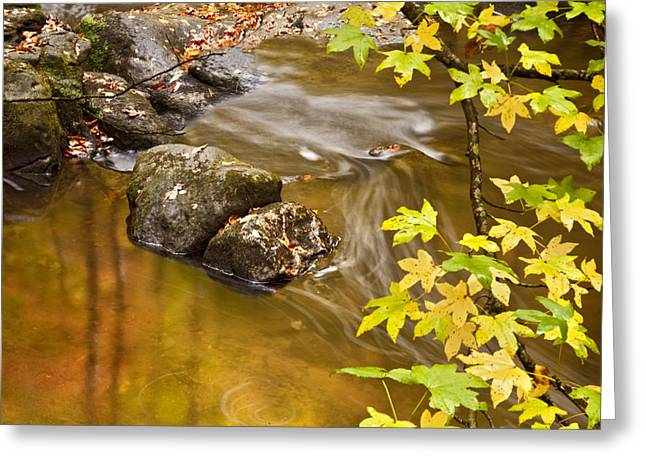 Reflecting Water Greeting Cards - Shimmering Gold Greeting Card by Rob Travis
