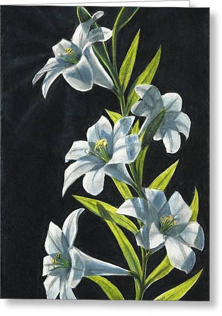 Backlit Drawings Greeting Cards - Shine Through- White Lilies Greeting Card by Kalen Malueg