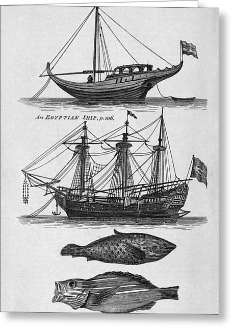 Square Rigger Greeting Cards - Ships And Fish From The Red Sea, Artwork Greeting Card by Middle Temple Library