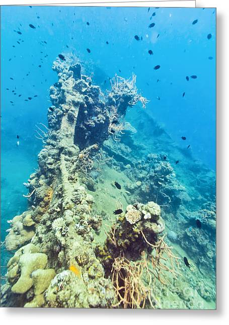 Shipwreck  Greeting Card by MotHaiBaPhoto Prints