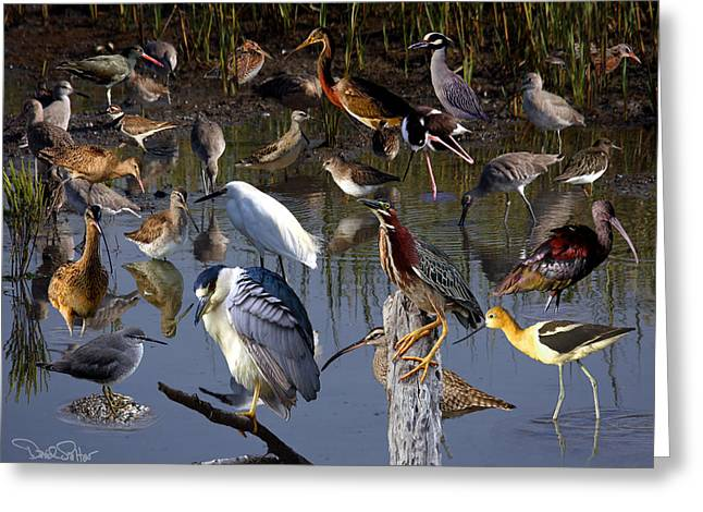 Shorebirds Greeting Cards - Shorebird Collage Greeting Card by David Salter
