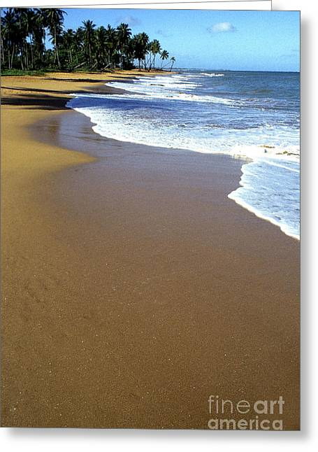 Puerto Rico Digital Greeting Cards - Shoreline along Pinones Greeting Card by Thomas R Fletcher