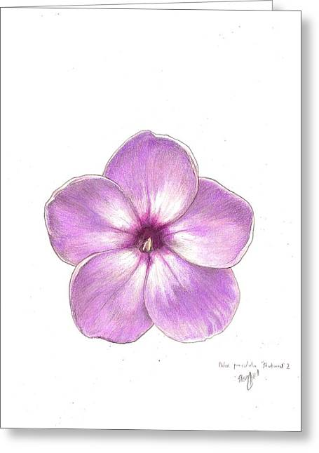 Steve Asbell Greeting Cards - Shortwood Phlox  2 Greeting Card by Steve Asbell