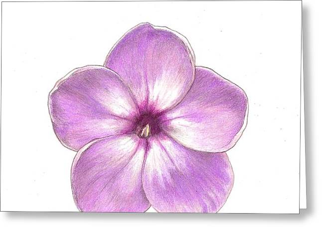 Shortwood Phlox  2 Greeting Card by Steve Asbell