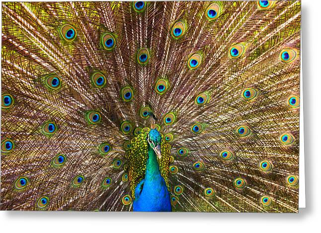 Avian Greeting Cards - Showing Your Colors Greeting Card by Mike  Dawson