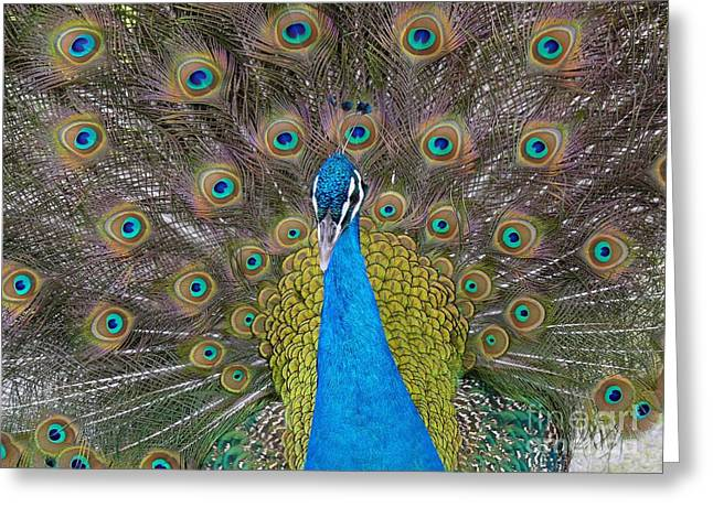 Friend Or Foe Greeting Cards - Showing Your True Colors Greeting Card by Terri Thompson