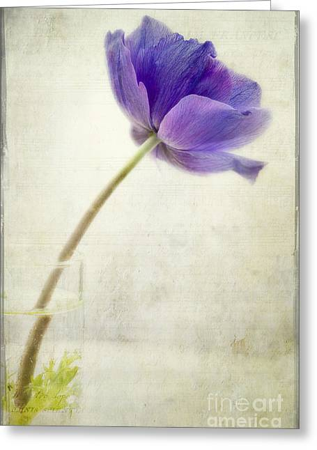 Shy Anemone Greeting Card by Marion Galt