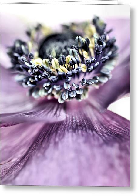 Roze Greeting Cards - Shy or just acting that way.... Greeting Card by Bob Daalder