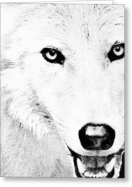 Out Of The Woods Greeting Cards - Shy Wolf Greeting Card by Debra     Vatalaro