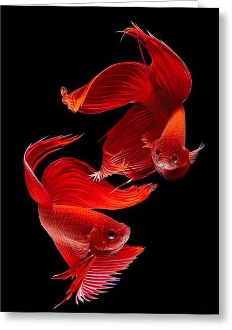 Siamese Fish Greeting Card by Subpong Ittitanakul