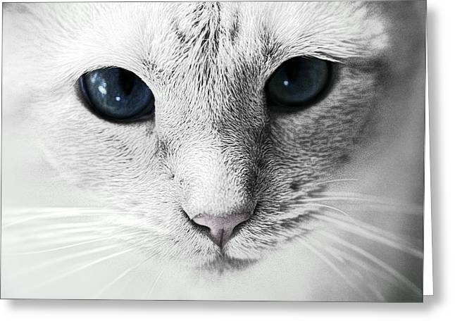 Red Point Siamese Greeting Cards - Siamese Stare Greeting Card by Wendy White