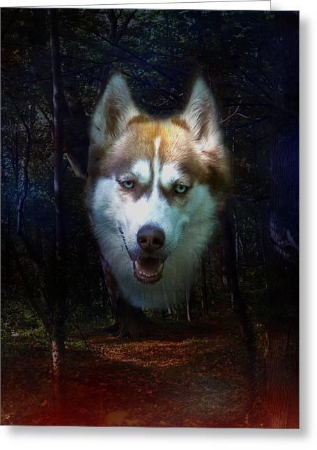 Husky Digital Art Greeting Cards - Siberian Husky Greeting Card by Brian Roscorla