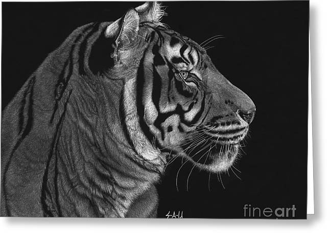 Tiger Drawings Greeting Cards - Siberian Tiger Greeting Card by Sheryl Unwin