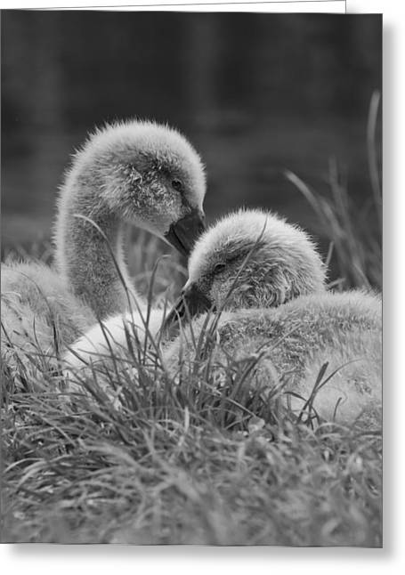 Ripples Of Black And White Greeting Cards - Siblings Greeting Card by Steven Poulton