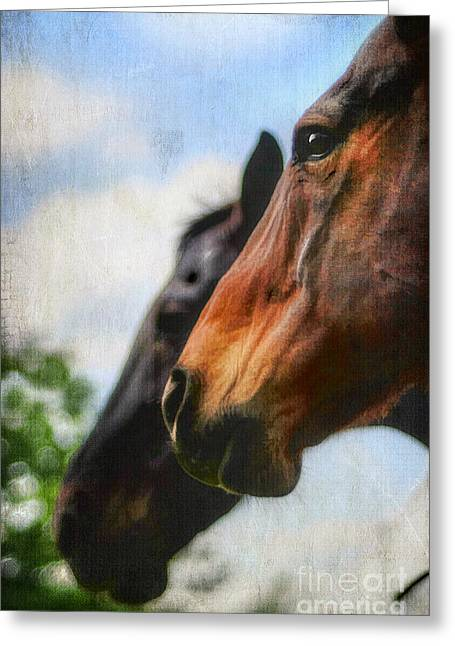 Kentucky Horse Park Photographs Greeting Cards - Side by Side Greeting Card by Darren Fisher