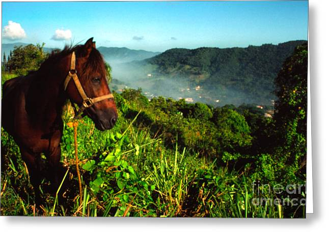 Puerto Rico Greeting Cards - Sierra De Luquillo Greeting Card by Thomas R Fletcher
