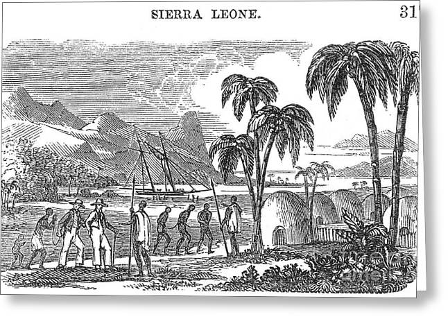 Sierra Leone: Slave Trade Greeting Card by Granger