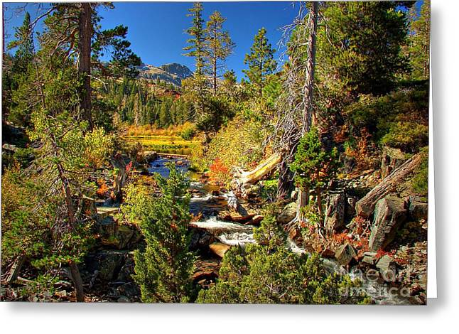 Fallen Leaves Greeting Cards - Sierra Nevada Fall Beauty at Lily Lake Greeting Card by Scott McGuire