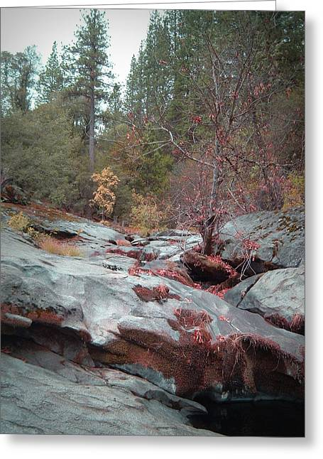 Mountain Road Greeting Cards - Sierra Nevada Forest 1 Greeting Card by Naxart Studio