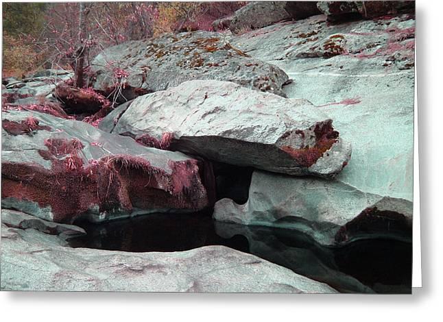 Sierra Nevada Forest Greeting Card by Naxart Studio