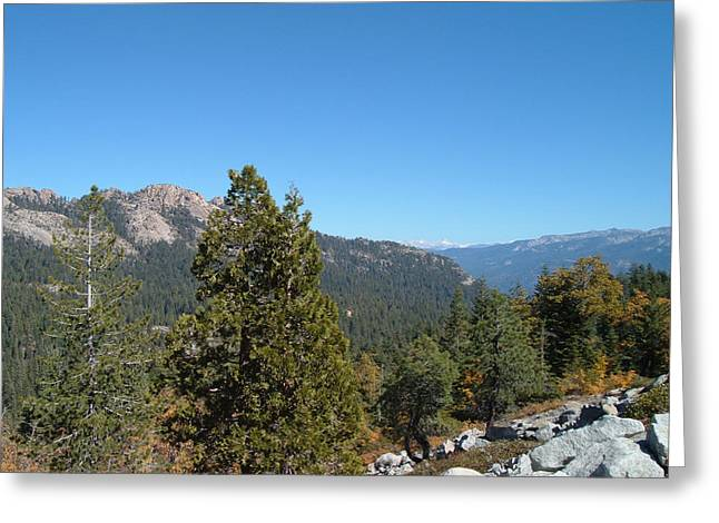 Pine Tree Photographs Greeting Cards - Sierra Nevada Mountains 2 Greeting Card by Naxart Studio