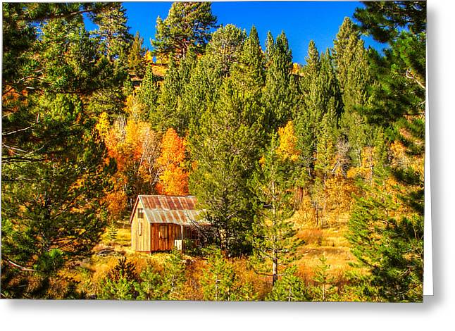 Rustic Colors Greeting Cards - Sierra Nevada Rustic Americana Barn with Aspen Fall Color Greeting Card by Scott McGuire