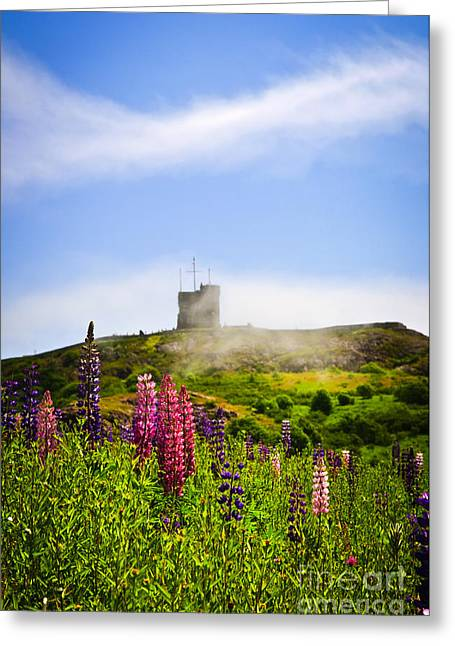 Fortification Greeting Cards - Signal Hill in St. Johns Newfoundland Greeting Card by Elena Elisseeva