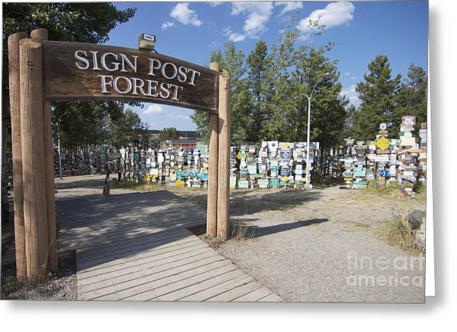 Watson Lake Greeting Cards - Signs of Memories Greeting Card by James Knights