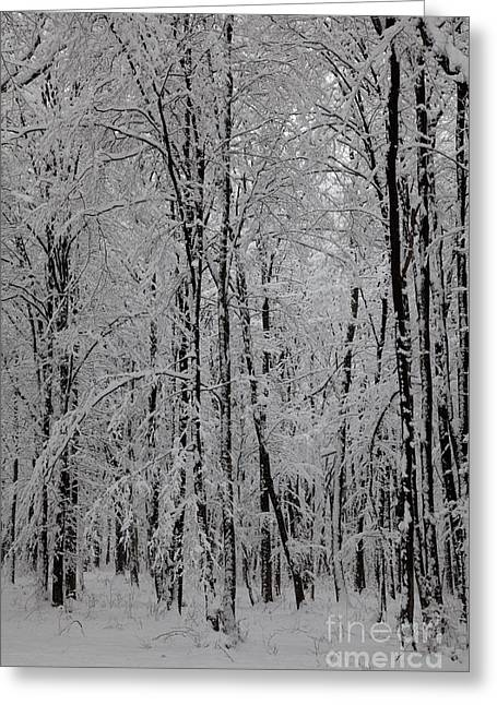 Snowy Day Greeting Cards - Silence of winter Greeting Card by Gabriela Insuratelu