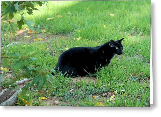 Photos Of Cats Greeting Cards - Silent Stalker Greeting Card by Cheryl Poland