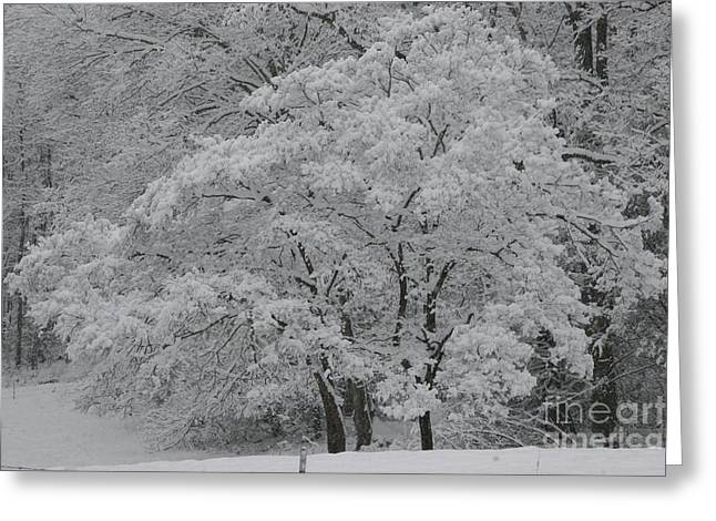 Ewing Greeting Cards - Silent White Greeting Card by Christopher Ewing