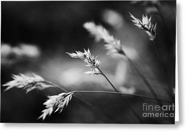 Wayside Greeting Cards - Silently - black and white Greeting Card by Hideaki Sakurai