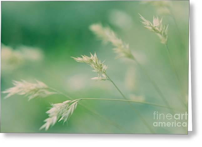 Wayside Greeting Cards - Silently - colour Greeting Card by Hideaki Sakurai