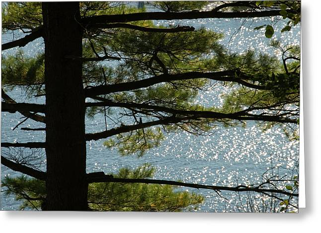 East Haddam Connecticut Greeting Cards - Silhouette Of A Tree With Connecticut Greeting Card by Todd Gipstein